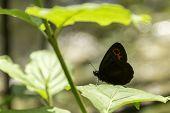 Gatekeeper butterfly under a leaf