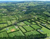 Aerial View Of Vineyards And Rural Farms. Northland, New Zealand