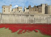 LONDON- AUGUST 7: 888,246 ceramic poppies, by artist Paul Cummins, where laid around the tower of london, to mark the 100th anniversary of britain entering the 1st world war. LONDON, AUGUST 7, 2014