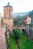 The Tree In The Ruin Tower Of Heidelberg Castle In Heidelberg