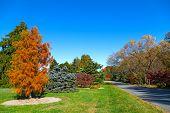 Autumn in US National Arboretum Washington DC.