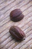 Jojoba Seeds (simmondsia Chinensis)