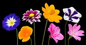 Collection of Various Colorful Flowers Isolated on Black