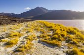 Bolivia, Antiplano: Laguna Colorada