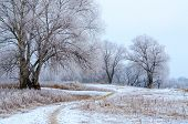 Early Twilight In December