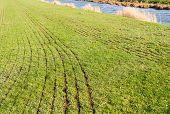Grassland After Mechanical Slurry Injection
