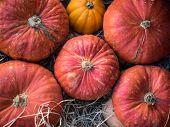 Pumpkins For Decoration At Campo Dei Fiori, Rome