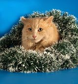 Ginger Fluffy Cat Sitting With Christmas Tinsel On Blue