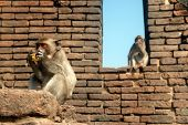 Monkey Mother And Her Son.