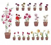 image of plant pot  - Flower pots with flowers  - JPG