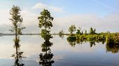 picture of swamps  - Lake Drummond is a freshwater lake at the center of the Great Dismal Swamp a marshy region on the Coastal Plain of southeastern Virginia and northeastern North Carolina between Norfolk Virginia and Elizabeth City North Carolina - JPG