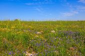 stock photo of golan-heights  - The spring blossoming Golan heights - JPG