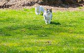 pic of domestic cat  - Cat outdoor portrait - JPG
