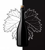 pic of sparkling wine  - sparkling wine with grape leaf on white and black background - JPG