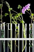 Flowers and plants in test tubes