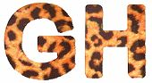 picture of g-spot  - Leopard fur G and H letters isolated over white background - JPG