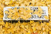 Ginkgo Covered Tombstone