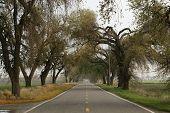 Rural Road California