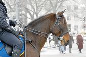 COP zu Pferd
