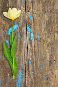 One Flower On A Wooden Board