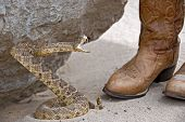 rattle snake attack