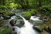 Stream in New Zealand forest