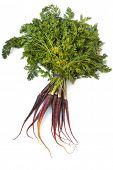 Reihe von Erbstück lila Karotten, gegenüber dem weißen Hintergrund. hohe in Antioxidantien.