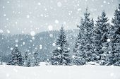Christmas Winter Card With Fir Trees And Snowflakes poster