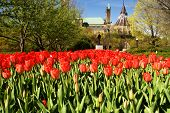 National Tulip Festival