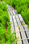 Wooden sidewalk over a peat-bog  in national park Bavarian Forest. Germany, Europe.