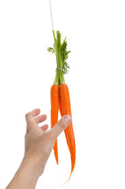 image of dangling a carrot  - Dangling carrot with white background close up shot - JPG