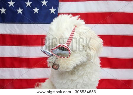 poster of White Dog with American Flag. White Dog wears american flag glasses. 4th of July celebration with a