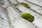 Moss On A Roof