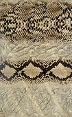 foto of unnatural  - Snake skin - JPG