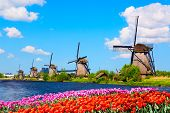 Colorful Spring Landscape In Netherlands, Europe. Famous Windmills In Kinderdijk Village With A Tuli poster
