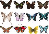 illustration with twelve different butterflies isolated on white background