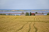Shoreline of northern Prince Edward Island with late summer wheat fields and sand dunes.