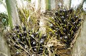 Palm Plat Seed Cluster Fruit Day