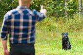 picture of working-dogs  - Dog owner trains his labrador retriever dog sits on background horizon format - JPG
