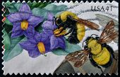 stamp printed in USA shows Purple Nightshade and Morrison Bumblebee