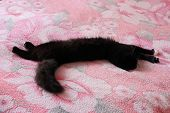 Black Cat Lying Prone On The Matrimonial Bed