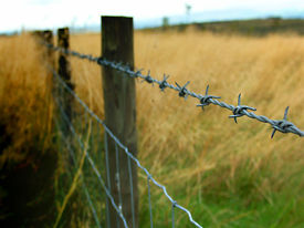 picture of barbed wire fence  - barbed wire fence, with shallow depth of field. deep saturated colour - JPG