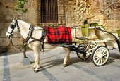 Traditional horse and cart at Cordoba