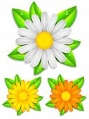 image of chamomile  - Daisy chamomile flowers with color petals on green leaves - JPG