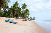 foto of tide  - Beach at low tide with palms and boat in foreground Pititinga Natal  - JPG