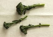 Broccolini on Linen
