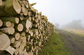 Woodpile in a field in a foggy winter