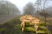 Woodpile near a forest in a foggy winter