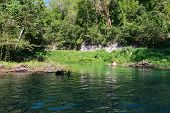 stock photo of martha  - Wilderness along the Martha Brae River Falmouth Jamaica - JPG