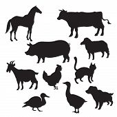 foto of cattle dog  - Vector image of Silhouettes of domestic animals - JPG